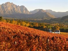 Franschhoek, our home town, a village, the gourmet capital of South Africa, with amazing views all year round, remains breath-taking every day! cannot say enough:)