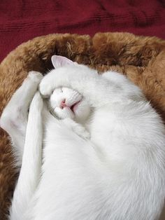 5 choses à savoir sur le sommeil des chats - Comprendre son chat ...