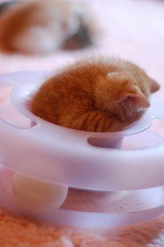 Rhoda Darling asleep at the wheel. by *lalalaurie, via Flickr