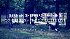 The following post contains the complete list of german shepherd training commands with with audio files for you to practice.