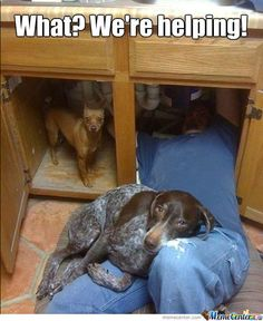 LOL!!! I have a dog like this...mine sits on the back of my calves while I'm kneeling down and washing my boys in the tub.