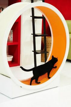 Cat Exercise Wheel::A great way to help indoor-only cats get more exercise! Just what my tuddypats need.. .