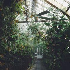 А вот это я осуществила! Я была в замечательнейшей оранжереи  - воздух внутри влажный и пахнет далёкими джунглями. Самым приятным было то, что мне дали кучу щепочек, чтобы я посадила их дома.