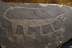 462913.  A cougar petroglyph carved in sandstone by Anasazi Indians about 1200 A.D. is e xhibited at the Rainbow Museum in the Petrified Forest National Park in Arizona , where it was found.