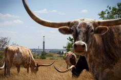 """""""Low Oil Prices Pose Threat to Texas Fracking Bonanza"""" - Suddenly the roaring economy here is cooling fast, chilled by the plunging price of crude."""