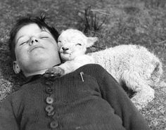 A newly-born lamb snuggles up to a boy. UK, 1940 ©...