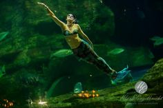 Whether you need to impress 20 or 2 000 guests, the Two Oceans Aquarium is the best function venue in Cape Town. Ocean Aquarium, Two By Two, Cape Town, Oceans, Mermaids, Events, Sirens, Mermaid, Ariel