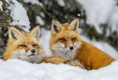 "beautiful-wildlife: ""Friends by © Shirley Donald """