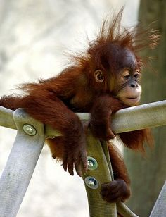ME THINKS SOMEONE IS HAVING A BAD HAIR DAY.......BUT, HANG IN THERE BUDDY  --  TOMORROW IS ANOTHER DAY................ccp