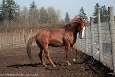 Horse Stock457 by BelleMisty