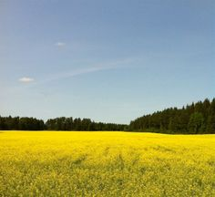 Field. Pelto.