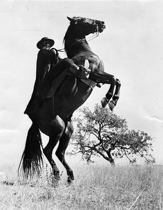 Le Signe De Zorro the Sign of Zorro De Norman Foster Et Lewis R. Foster Avec Guy Williams 1958 Television Photo - 30 x 41 cm Great Tv Shows, Old Tv Shows, Movies And Tv Shows, Tyrone Power, Maisie Williams, Tarzan, Larry Wilcox, The Legend Of Zorro, Walt Disney