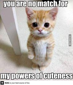 My-my-my will-power is weakening, I can't hold out much longer!! Ahhhgggggg, the Force of Cuteness is strong in this one!