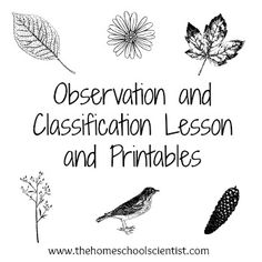 observation and classification lesson and printables - TheHomeschoolScientist.com