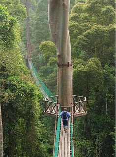 borneo rainforest canopy walkway    its makes my hands clammy just looking at this, but i would do it in an instant! so awesome!