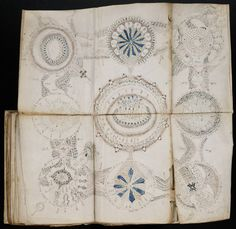 Res Obscura: Images from the Voynich Manuscript