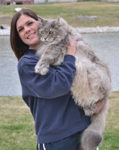 Maine Coon Forum Tattoo Picture - #catbreeds - See More Tops Main Coon Cat Breeds at Catsincare.com!