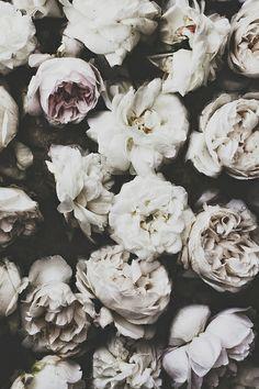white flowers x