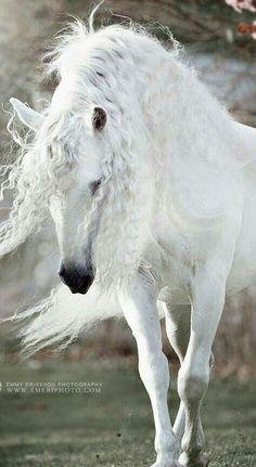 Fulfill the Fashion Forever - Goktan - Pferdefotografie - Horse Cute Horses, Pretty Horses, Horse Love, Beautiful Horse Pictures, Most Beautiful Animals, Andalusian Horse, Friesian Horse, Arabian Horses, Majestic Horse