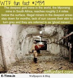 WTF Facts : funny interesting & weird facts Deepest gold mine in the world -WTF fun facts Wow Facts, Wtf Fun Facts, True Facts, Funny Facts, Random Facts, Crazy Facts, Random Stuff, Uber Facts, Fun Stuff