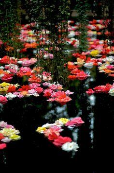 Begonia pool, Fujikacho-Park, Shizuoka, Japan