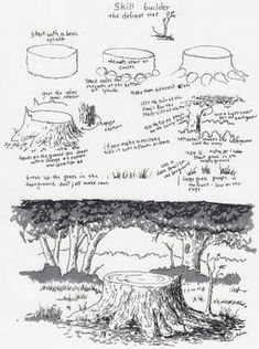 Adron's Art Lesson Plans:MXS Drawing a Picture of a Tree Stump a Skill Builder . - Adron's Art Lesson Plans:MXS Drawing a Picture of a Tree Stump a Skill Builder … Adron's A - Realistic Drawings, Cool Drawings, Drawing Sketches, Manga Drawing, Tree Drawings Pencil, Nature Drawing, Landscape Drawings, Landscape Art, Landscapes
