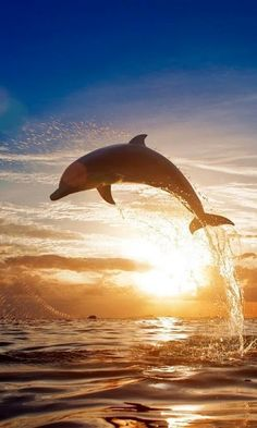 Dolphin in the sunset..