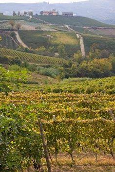 Piemonte #wineyards