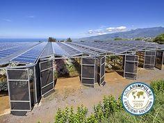 Agrinergie® Solar Energy, Solar Power, Types Of Farming, Market Garden, Land Use, Plant Species, Small Farm, Sun Shade, Medicinal Plants
