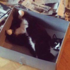 Min tur att hålla låda!