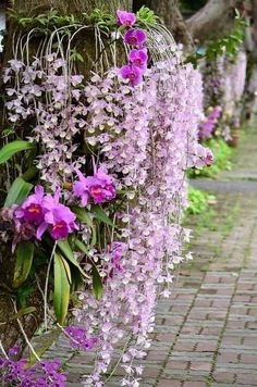 Orchid Cactus, Dendrobium Orchids, Life Is A Gift, Land Scape, Flora, Rustic, Plants, Tropical Gardens, Beautiful