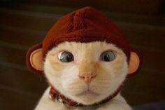 Monkey Kitteh!