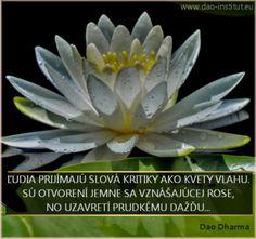 Ľudia prijímajú slová kritiky ako kvety vlahu. Sú otvorení jemne sa vznášajúcej rose  a uzavretí prudkému dažďu...
