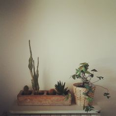 cactus and oxalis