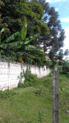 Muro do Colégio  Nossa Senhora do Carmo.