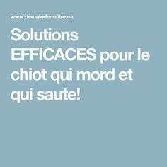 Solutions EFFICACES pour le chiot qui mord et qui saute!
