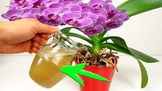 O účinkoch vody z varených zemiakov ste už určite počuli, je plná živín a vitamínov a v domácnosti sa dá naozaj perfektne využiť. jedným z najlepších spôsob, je jej využitie vo forme hnojiva pre vaše … Growing Orchids, Growing Plants, Growing Vegetables, Orchid Care, Diy Planters, Diy Patio, Plant Care, Compost, Bonsai