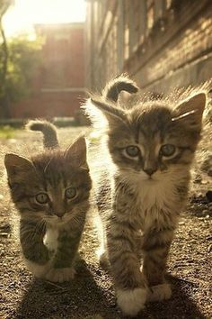 Find Cute Puppies, Cute Kittens, and Cute Animals Pictures and Videos. Submit Your Pets! Pretty Cats, Beautiful Cats, Animals Beautiful, Beautiful Babies, Simply Beautiful, Beautiful Creatures, Beautiful Images, Cute Baby Animals, Animals And Pets