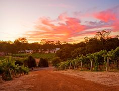 "Clairault is one of the pioneering vineyard-winery estates in Margaret River, Western Australia. Excellent Chardonnay and an even more exotic rosé ""Cape Pink"". Sadly, I don't think they have produced any of the rosé since 2008."