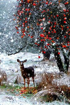 Merry Christmas & Happy New Year !!! WINTER...