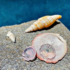 Retro Studs- Seashell - Pink