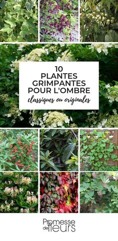 Climbing plants for shade: which ones to choose? Evergreen Climbing, Shade Garden Plants, Beautiful Flowers Pictures, Plant Aesthetic, Rose Trees, Annual Plants, Plant Design, Balcony Garden, Outdoor Plants