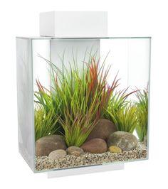 Fluval Edge 12 gallon Aquarium
