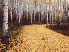 I would *like* birch trees to line the driveway...but it's not important.