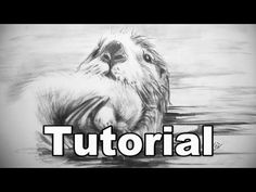 How to Draw an Otter / animal drawings / #27 - YouTube