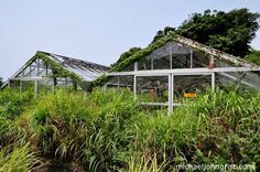 Japan's Jungle Park greenhouses
