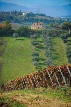 _______________________ -ITALIA - Ascoli Piceno: Azienda Agricola Saladini-Pilastri  by  Francesco-Welcome and enjoy- - #Expo2015 #WonderfulExpo2015 #ExpoMilano2015 #Wonderfooditaly #MadeinItaly #slowfood #FrancescoBruno    @frbrun  http://www.blogtematico.it  frbrun@tiscali.it    http://www.francoingbruno.it