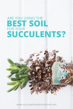 Succulent soil is so important to keeping them alive! Find out the best soil for succulents in this post!