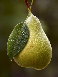 Pear Photography
