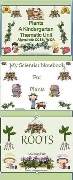 Kindergarten plants unit.  This product meets all your needs to implement an extremely effective thematic unit on plants. Your students will be exposed to the concepts and vocabulary of the unit through reading, writing, poetry, art projects, science experiments, and math activities . CCSS and WIDA standards are addressed and written out for your teaching agenda.